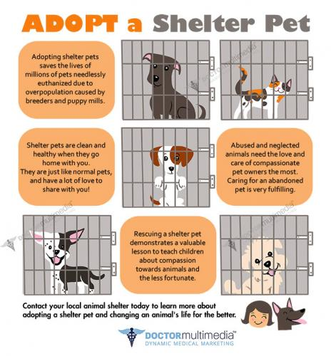 AdoptShelterPet preview