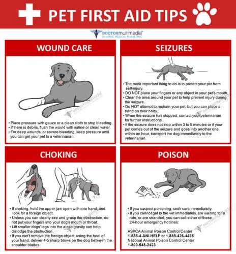 PetFirstAid preview